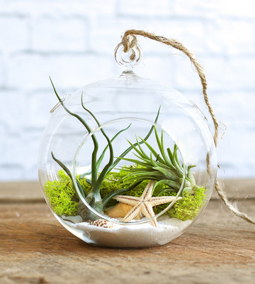 Lovely Little Terrariums