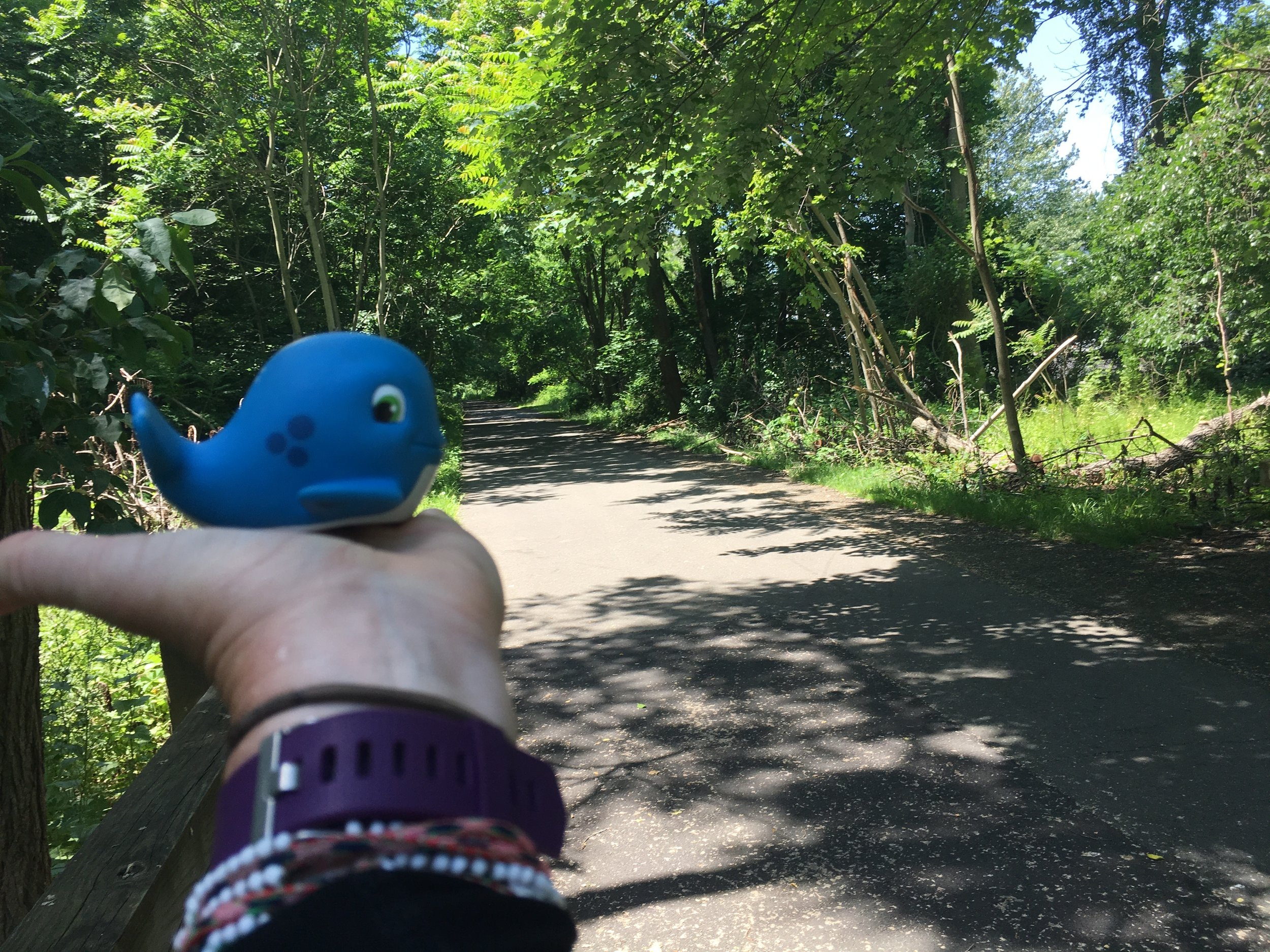 Whaley on the trail