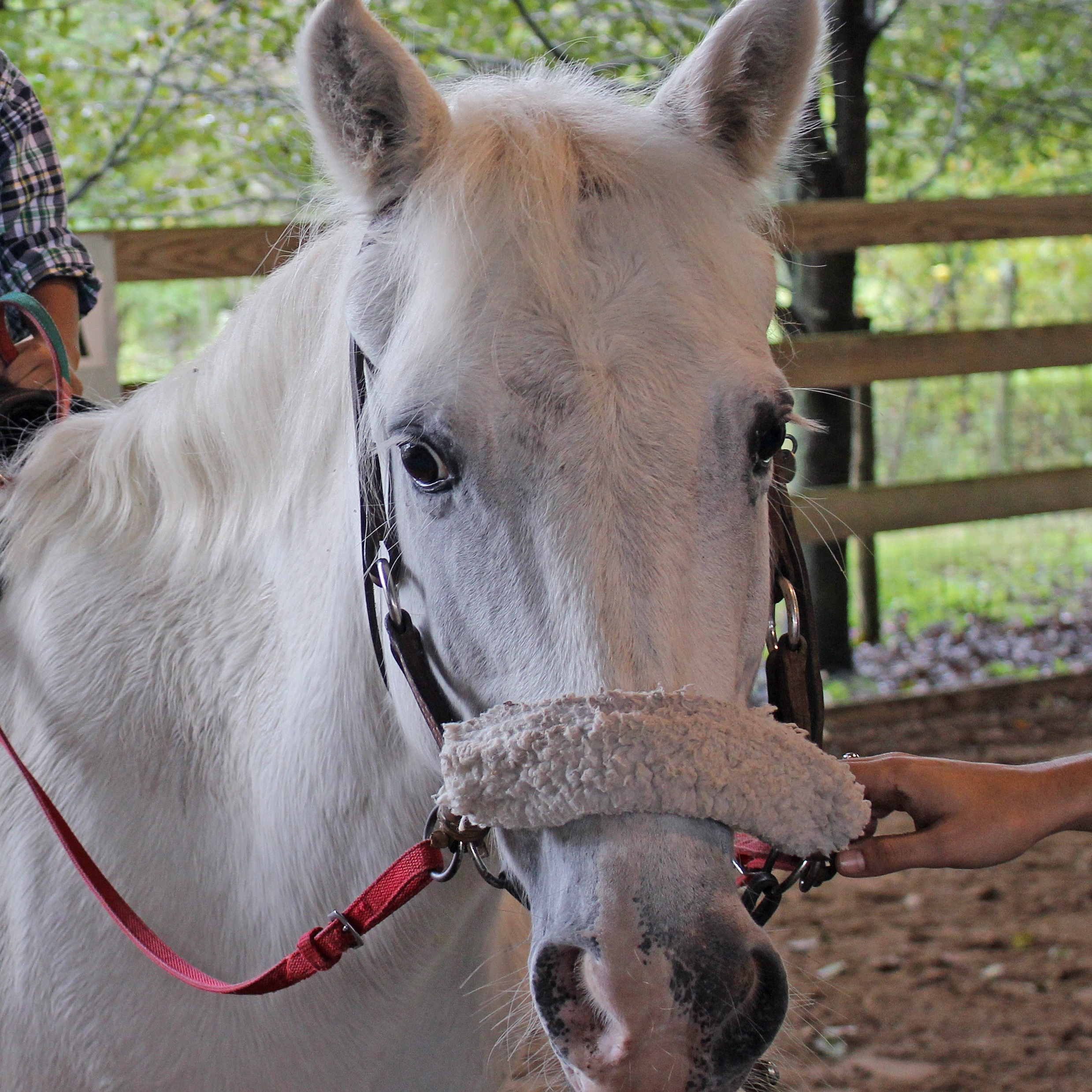 Pony - Her registered name is Princess Polo but the Defelice Family fondly calls her