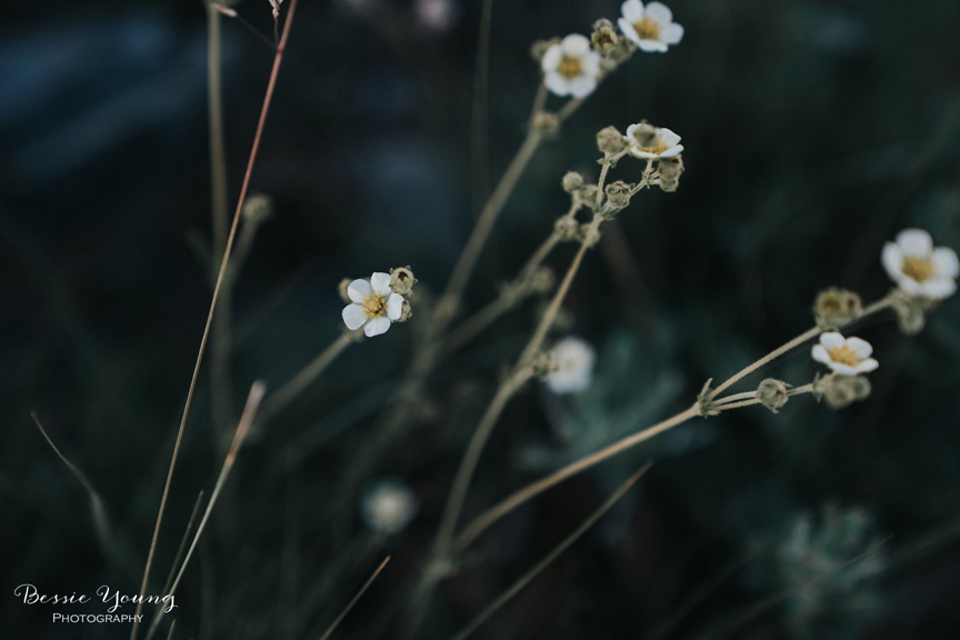 Wildflowers in the Ansel Adams Wilderness By Bessie Young Photography