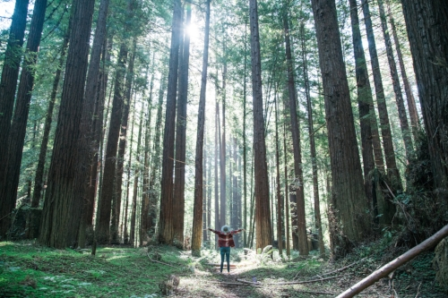 California National Parks List by Adventuring of a Small Town Girl (ASTG) - Redwood National Park