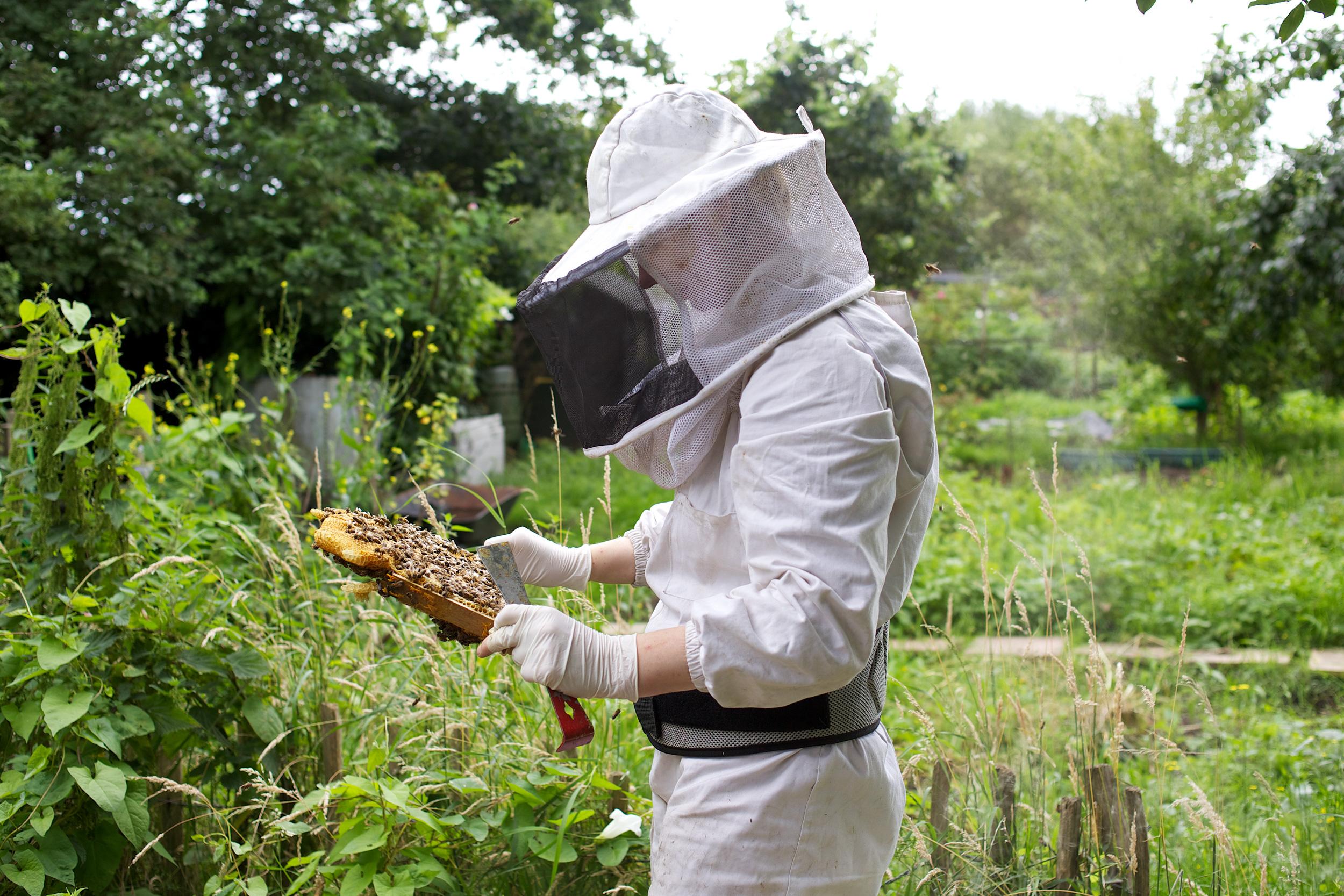bees-camilla-goddard-katie-hyams-reportage-01.jpg