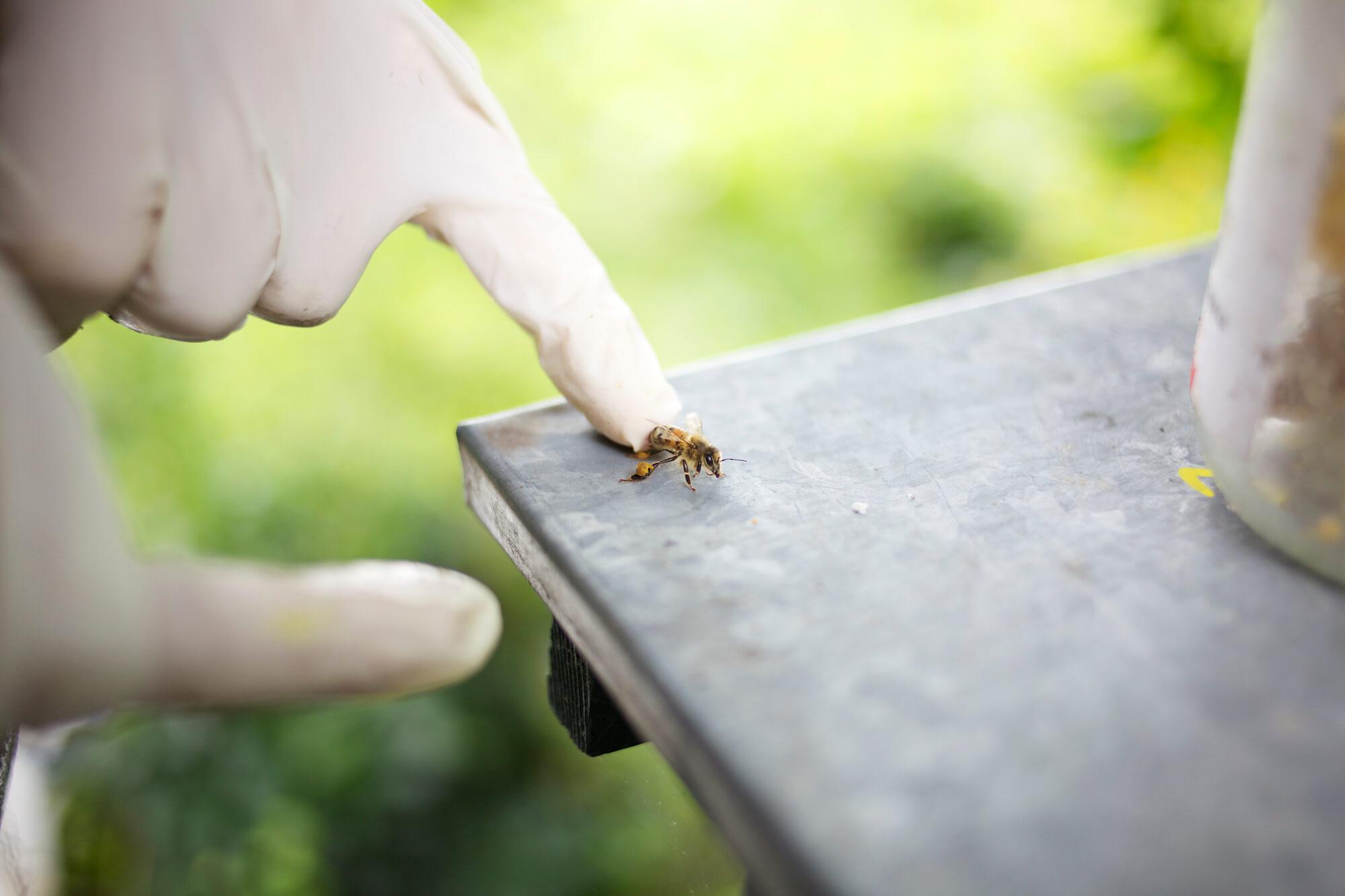 bees-camilla-goddard-katie-hyams-reportage-06_d.jpg