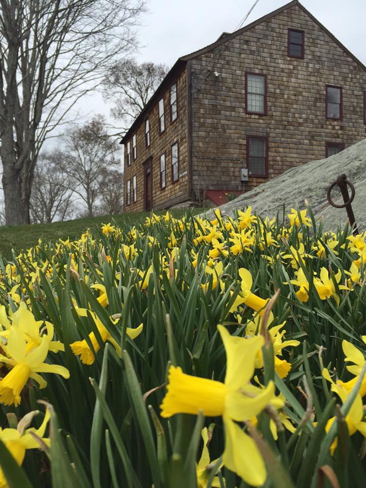 daffodil 12.jpg