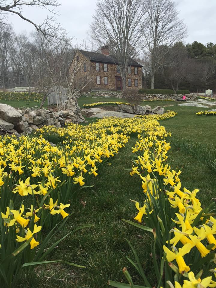 daffodil 14.jpg