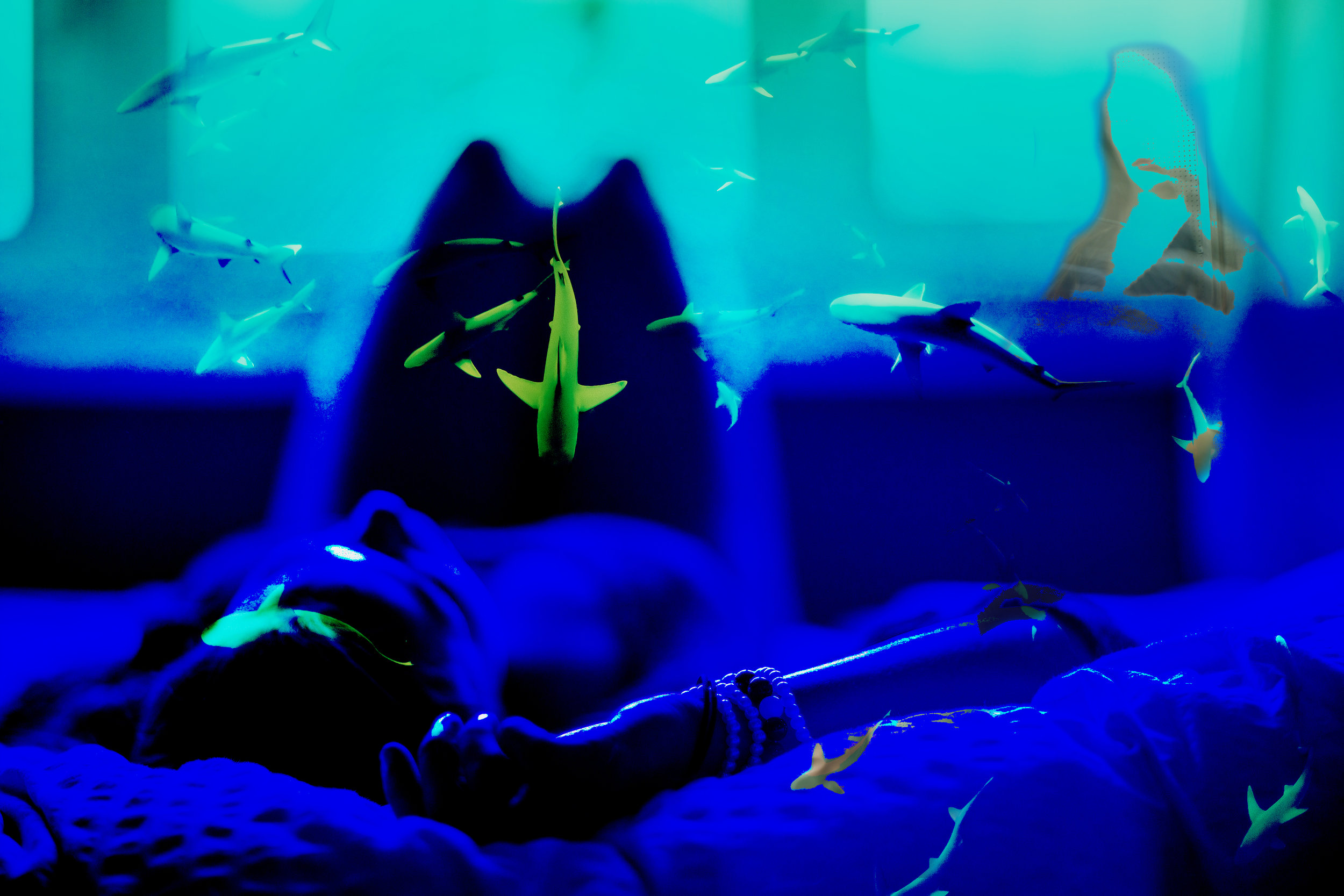 Sharks-nd-Lady.jpg