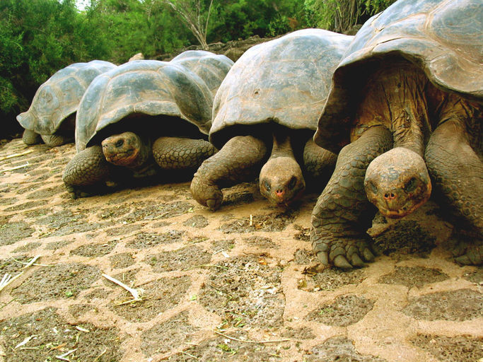 turtles move faster than 3 megabits per second? (Getty Images license)