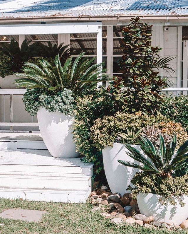 On the road in Palm Beach, NSW | Shot by @ablondieabroad - #traveltheworld #igtravel #getaway #wanderlust #adventure #travelmore #lovetotravel #luxurytravel #tourism #travelpics #wanderer #newsouthwales #tourismaustralia #exploreaustralia #palmbeach #gardening #garden #housegoals #boathousehome #cottage #coastalcottage #coastalinteriors #homeinspiration #whiteonwhite