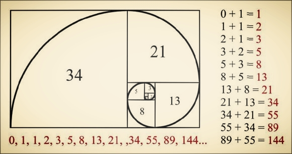The Fibonacci Sequence