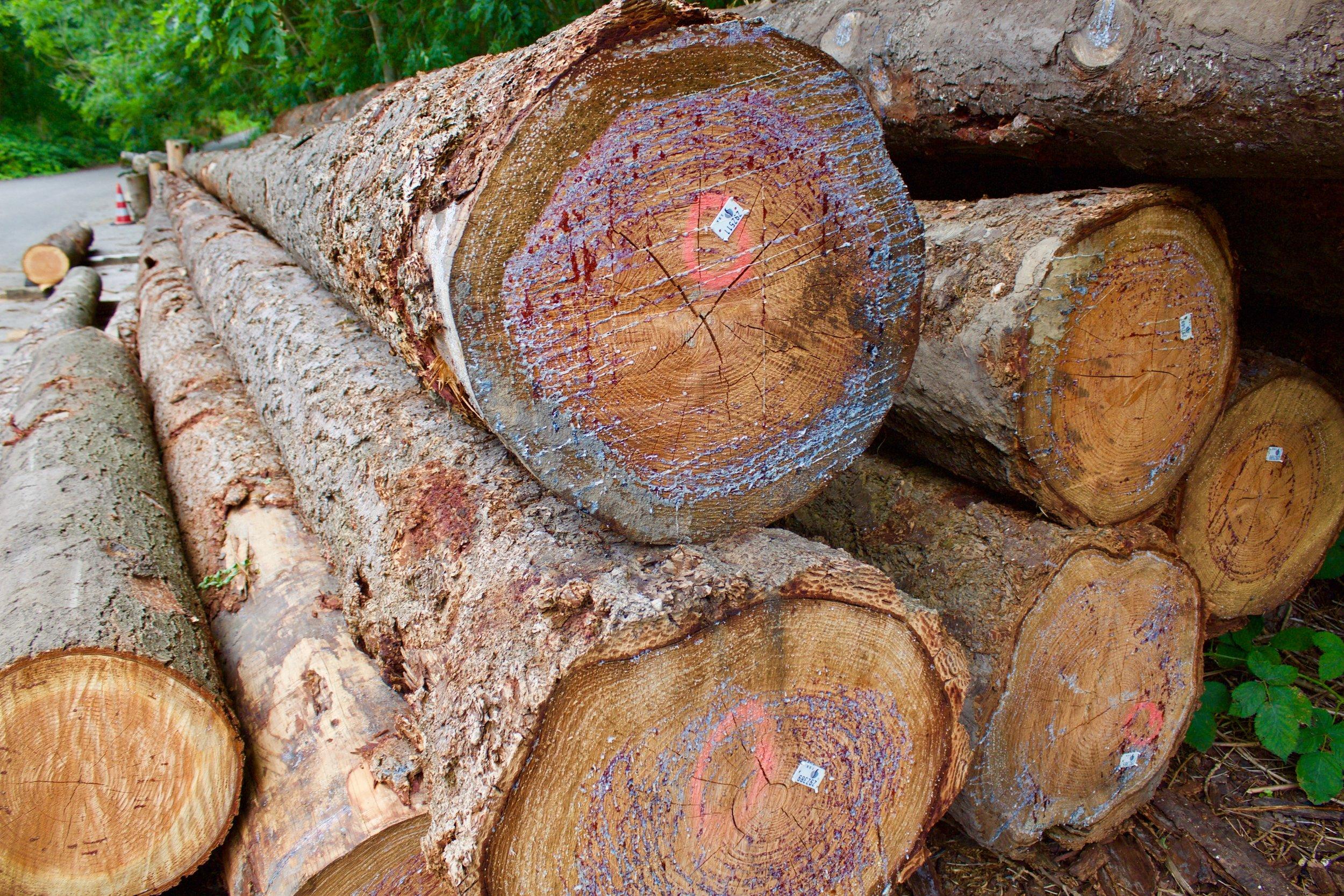 boomstammen houtzaagwerf