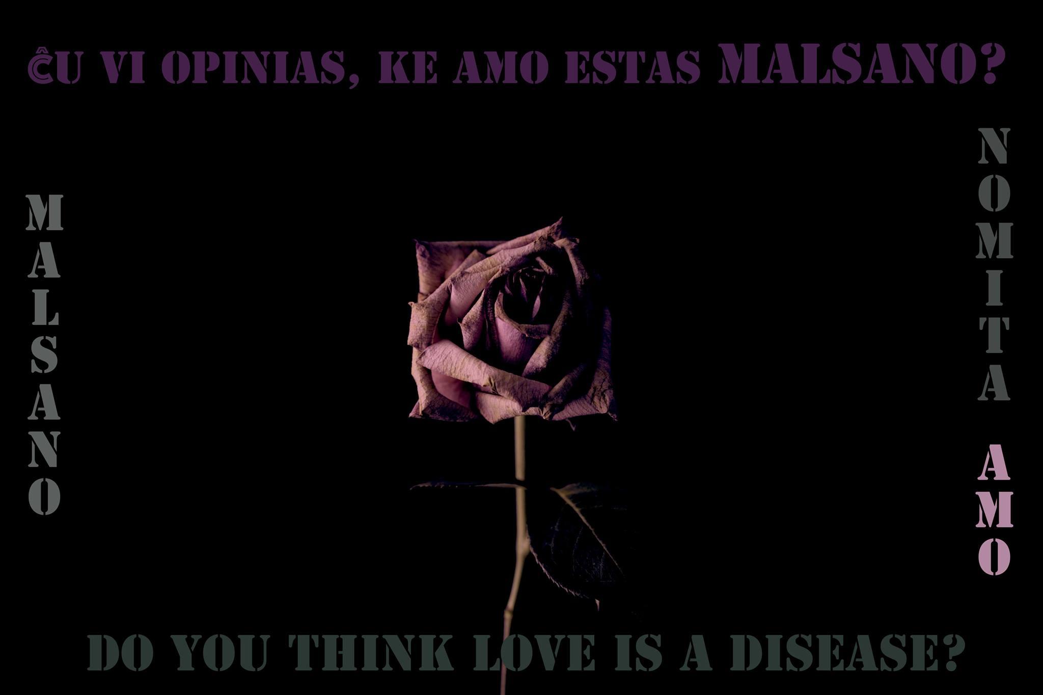malsano_rose1.jpg
