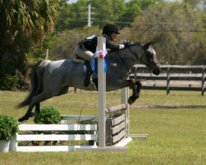 Penelope - SOLD: 7 year old, German Riding Pony