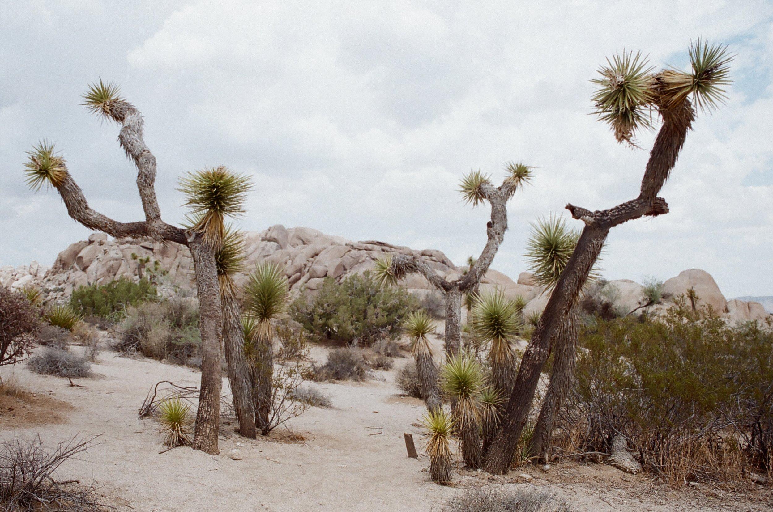 Joshua Tree- Summer 2018