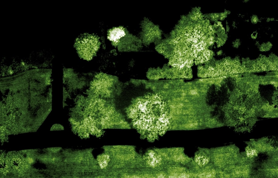 See urban forestry in a new light