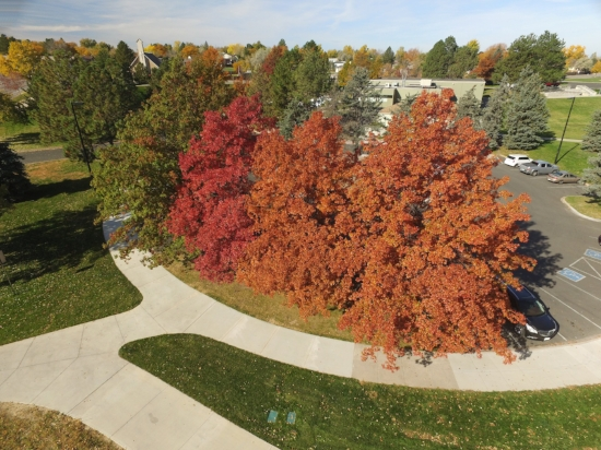 Oaktober tree health assessments and tree care social media from above