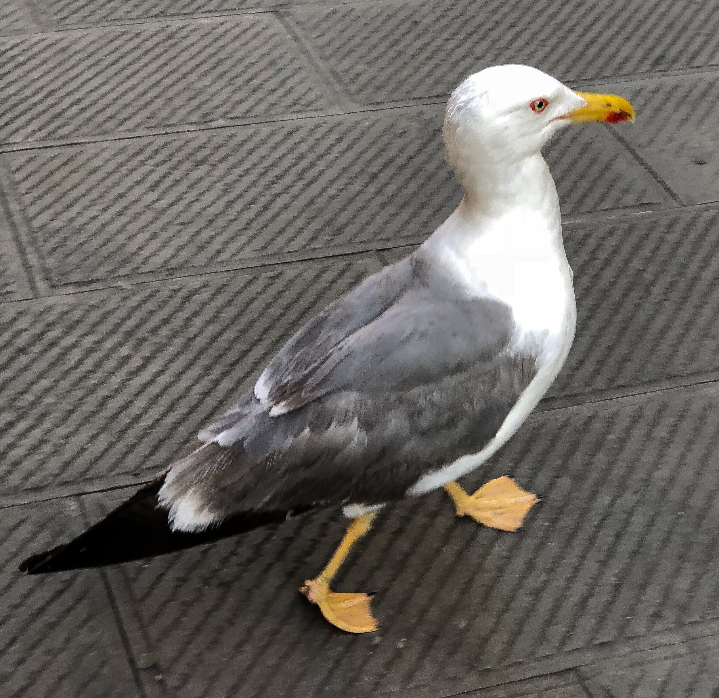 So I am just going about my merry way when I notice a seagull strolling next to me! I am just kind of obsessed with these friendly birds!