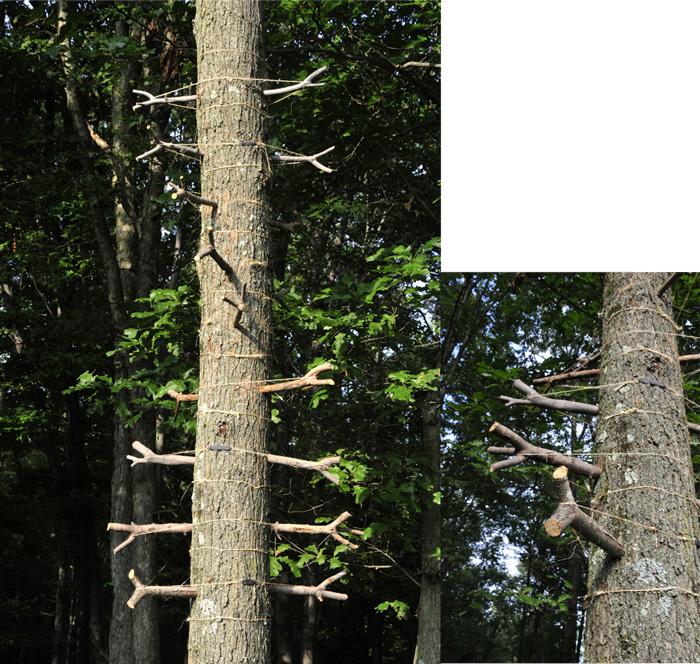 Double Arbor Helix