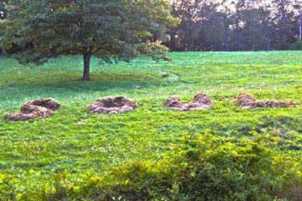 SOUL a compost pile