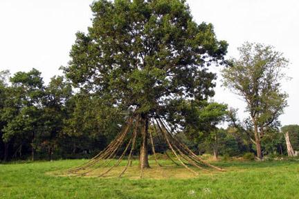 Lady Oak