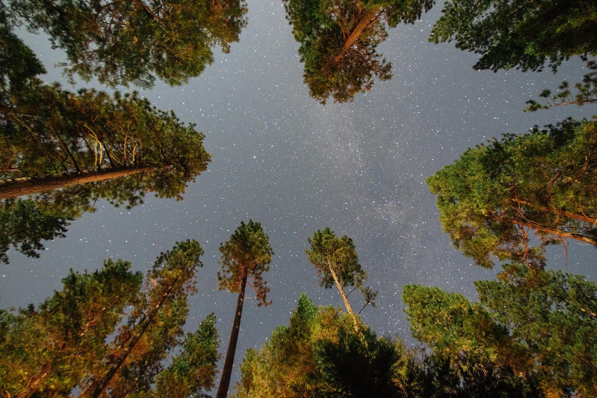 Yosemite Stargaze