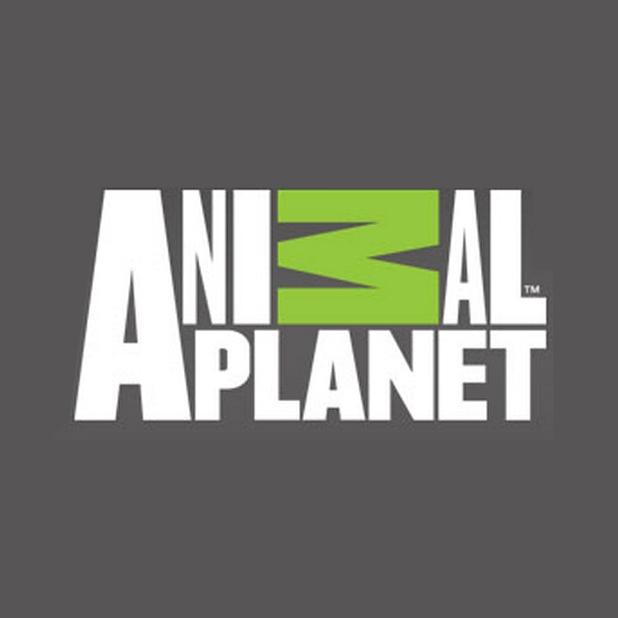 Animal Planet | Sound Designer & Mixer