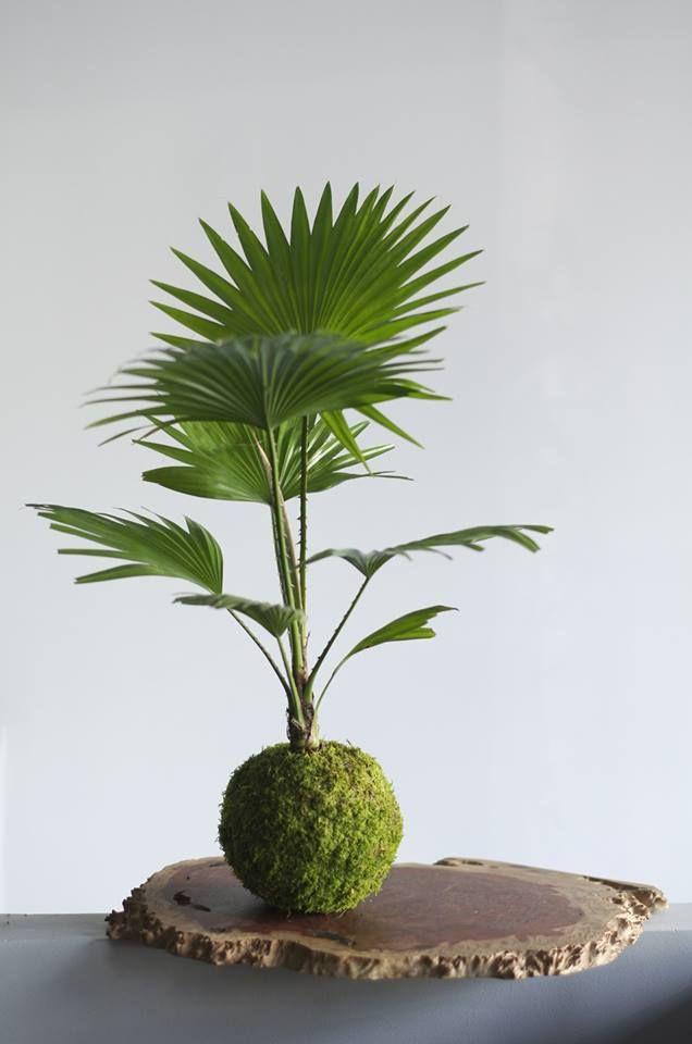 kokedama palm.jpg