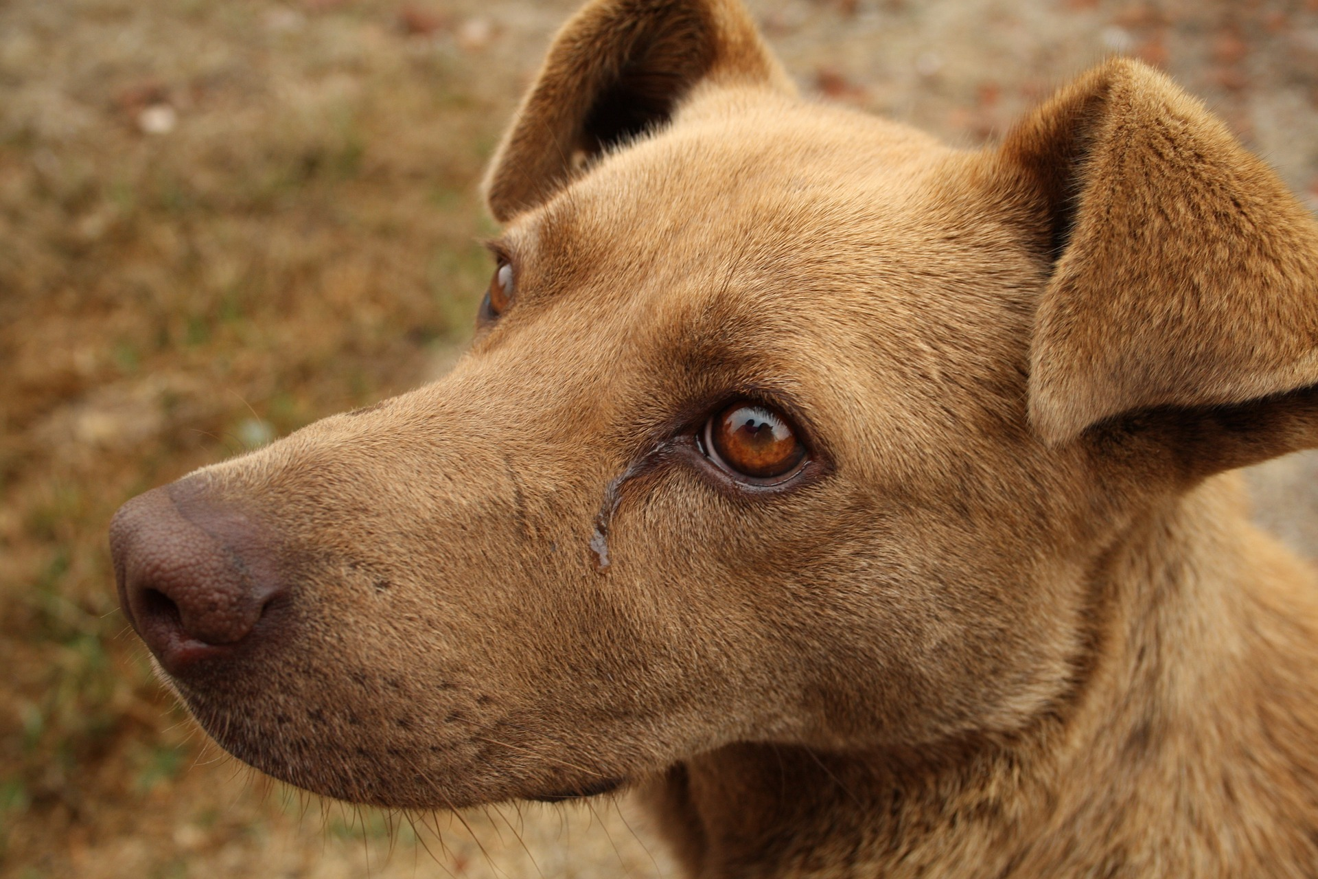 canine-1475738_1920.jpg