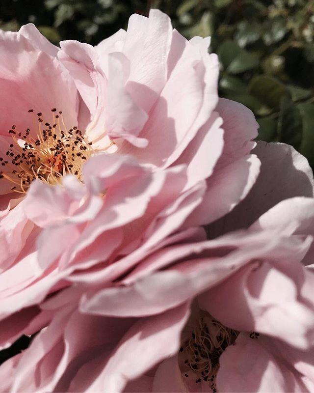 Spring is creeping in! 🌸👋🏽 • • • • • #springbreak #spring #flowers #floral #springsummer2019 #pink #garden #itsspring #firstdayofspring #springtime #bloom #blog #blogger #vancouver #vancouverisland #vancouverbc #vancouver_canada #newfoundland #newfoundlandandlabrador #yyt #yul #vancity #vancouverfoodie