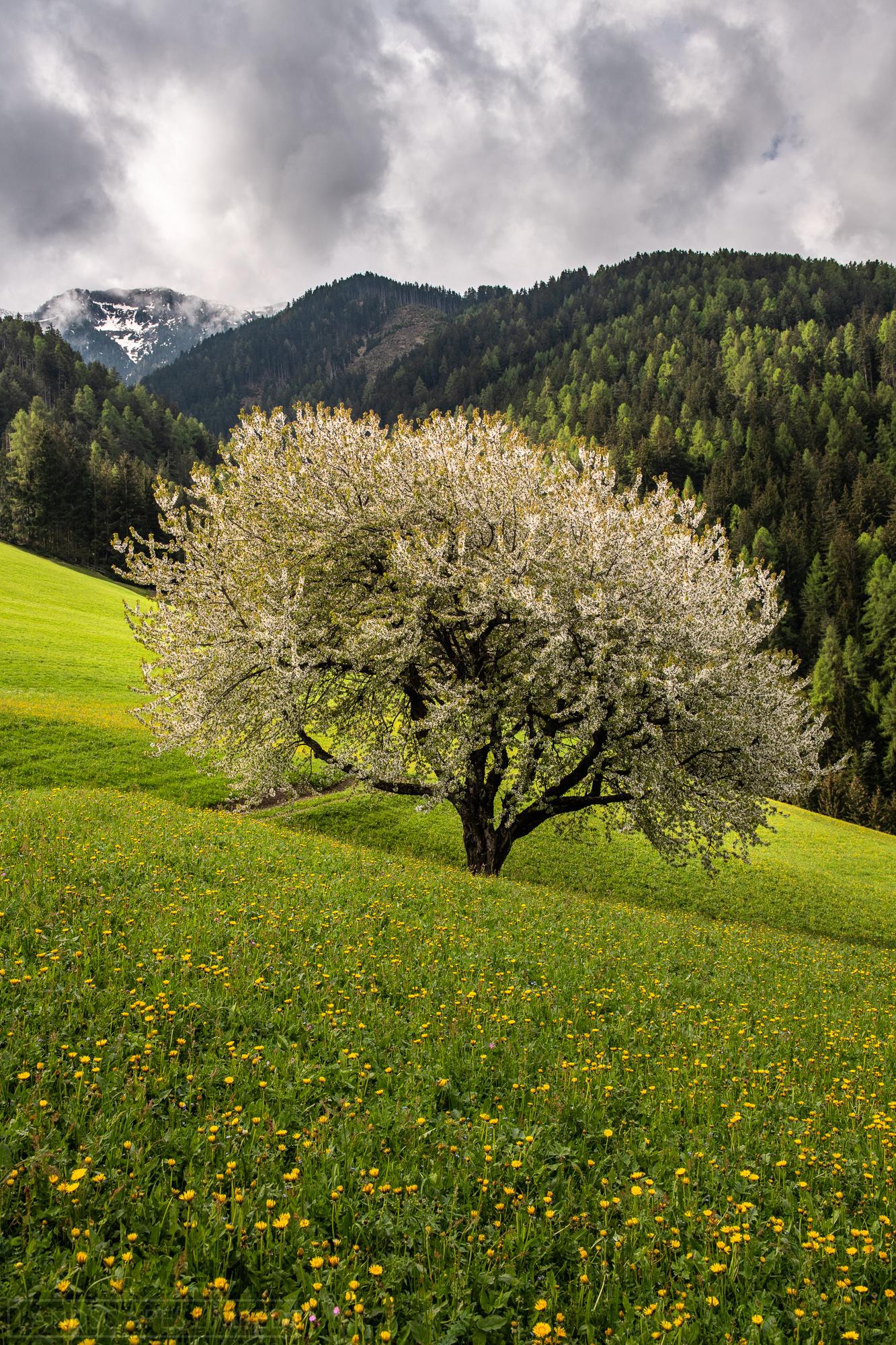 Tyrol Spring