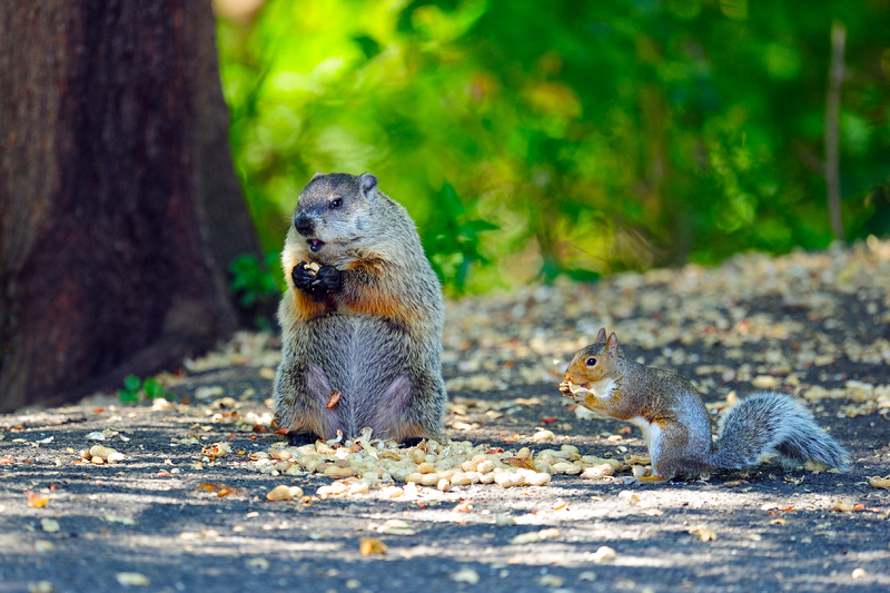 "Sciuridae Snacking! It's a ""family"" affair                                                                                       Photo: BKushner/Stock Free Images"