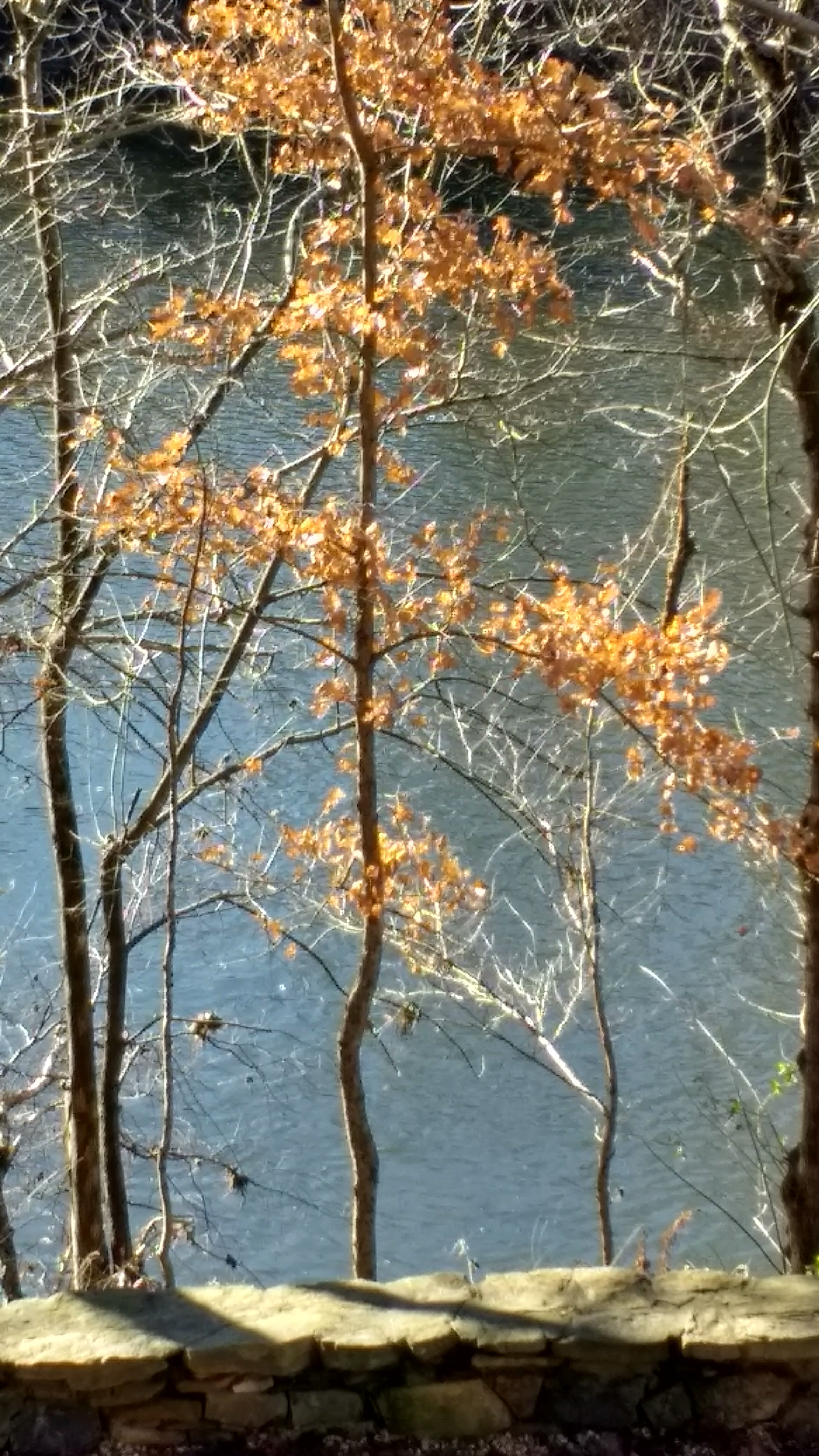 Haw trees.jpg