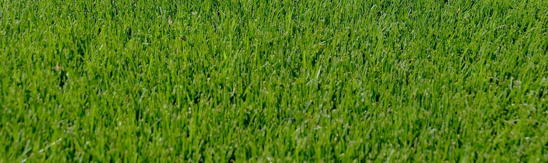 Keeping Arizona green one less drop at a time -
