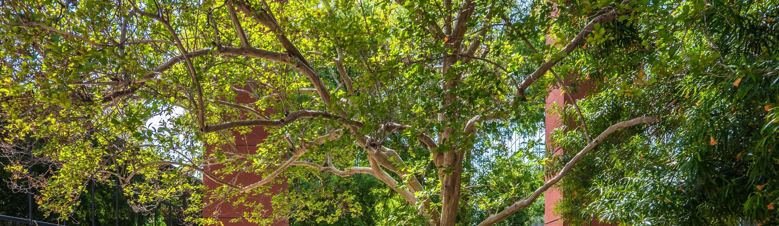 Tree Service -