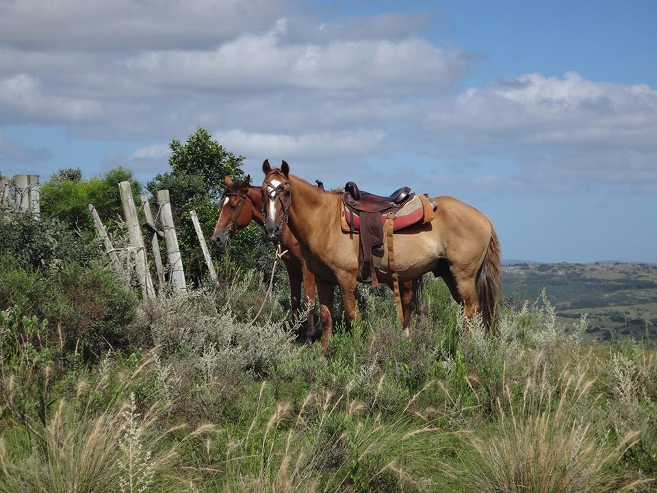uruguay horses.jpg