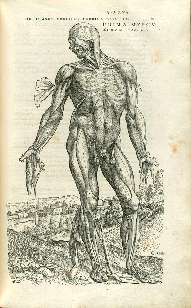 Vesalius from  British Museum