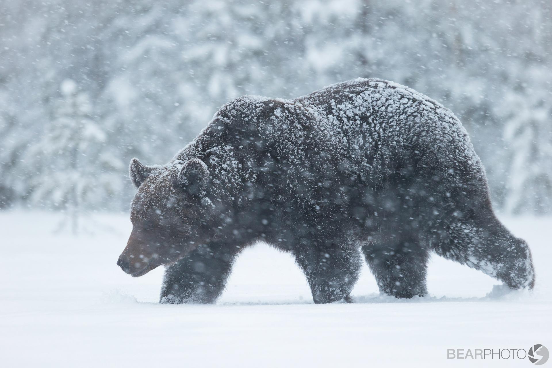 Brown Bear Photography Tour-3.jpg