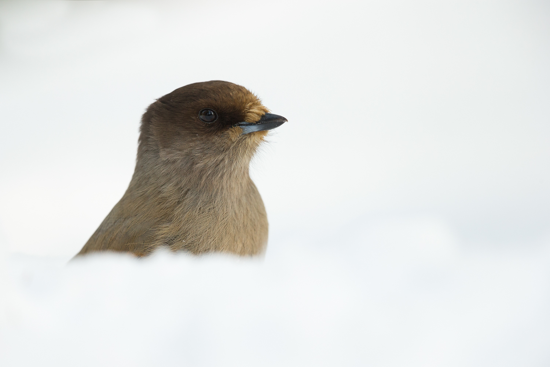 Bird Life Finland Bear Photography Tour-2.jpg