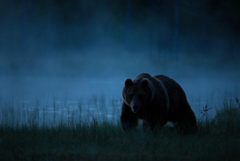 Brown bear photography tour Finland-22.jpg