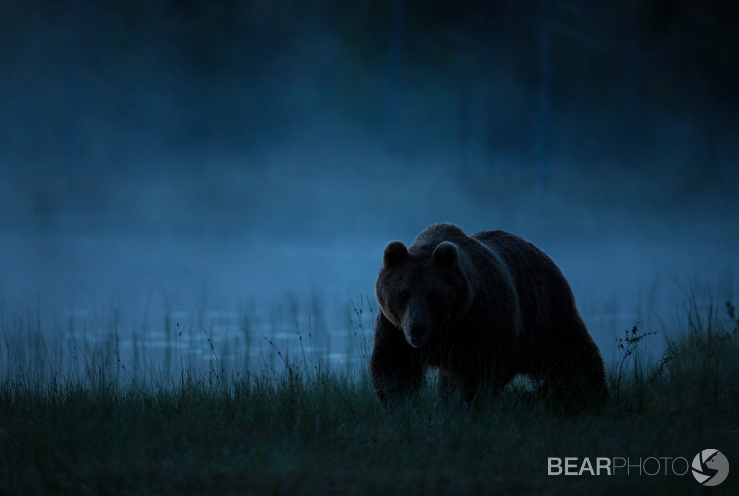 Brown bear tour in Finland
