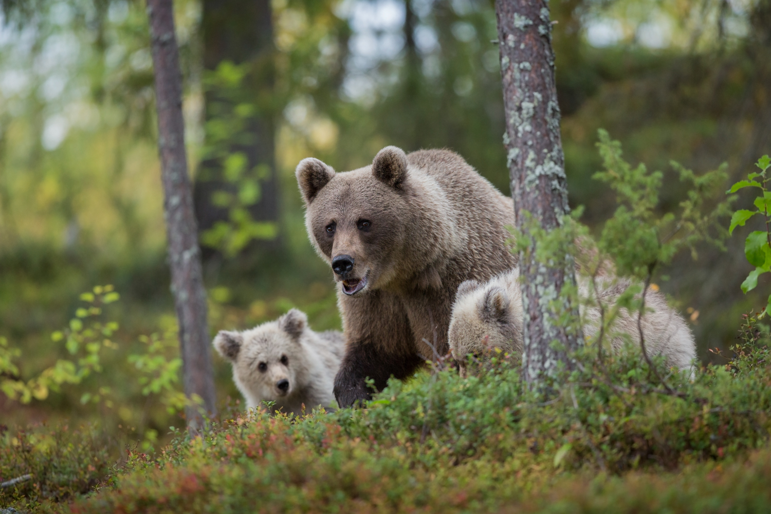 Mother_Cubs_0T2A8649-2.jpg