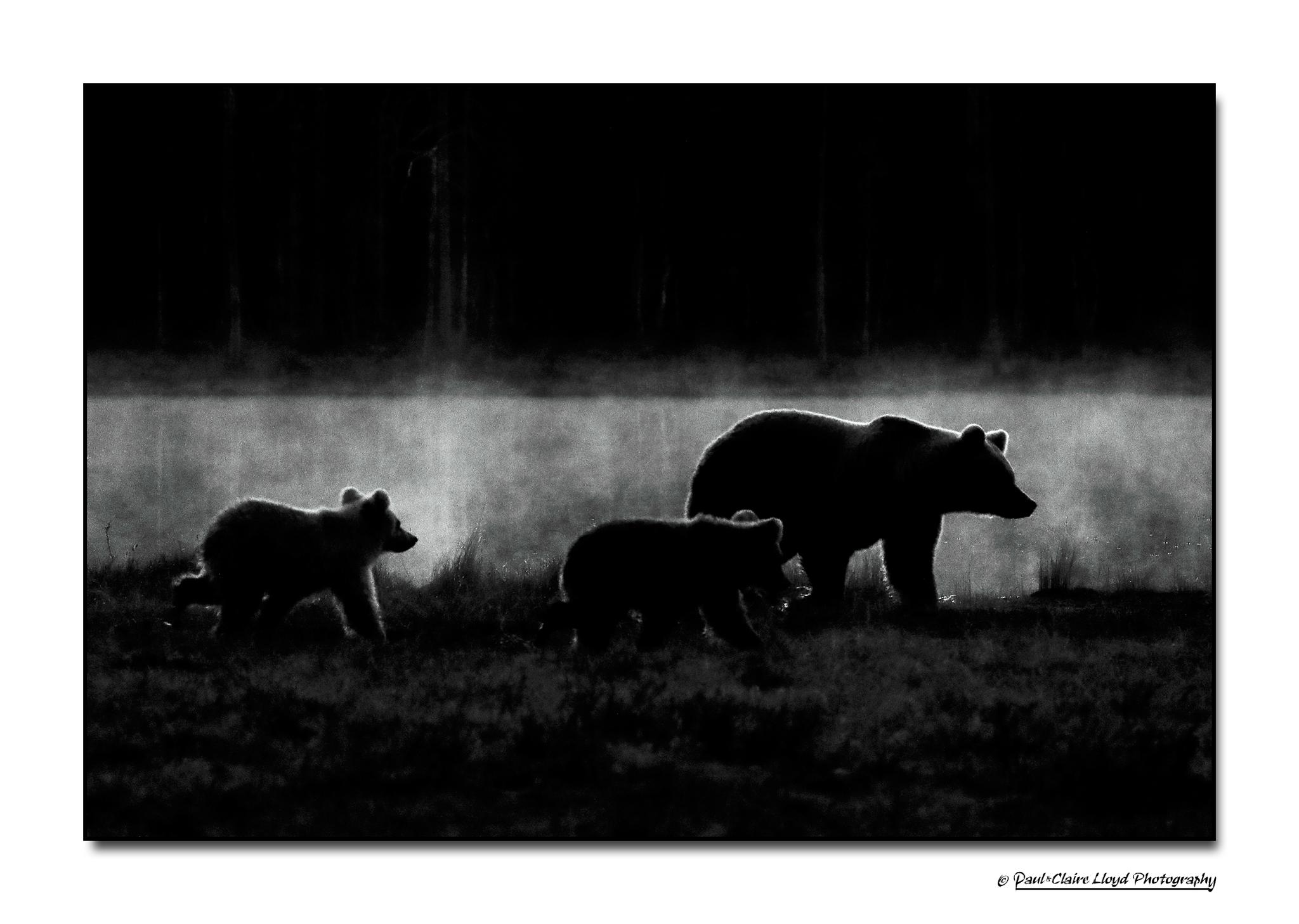 Lumikki-two-cubs-dark.png