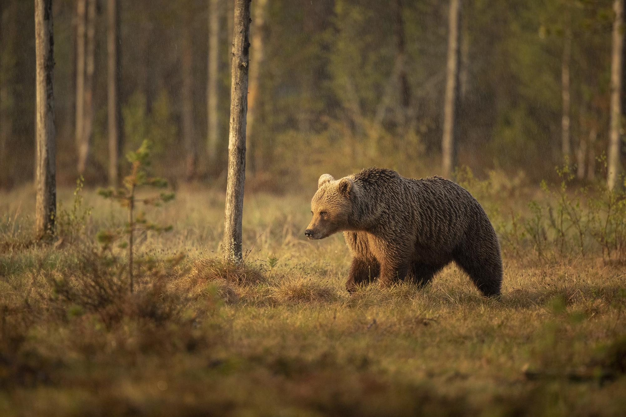 Finland May_270519_2154-1.jpg