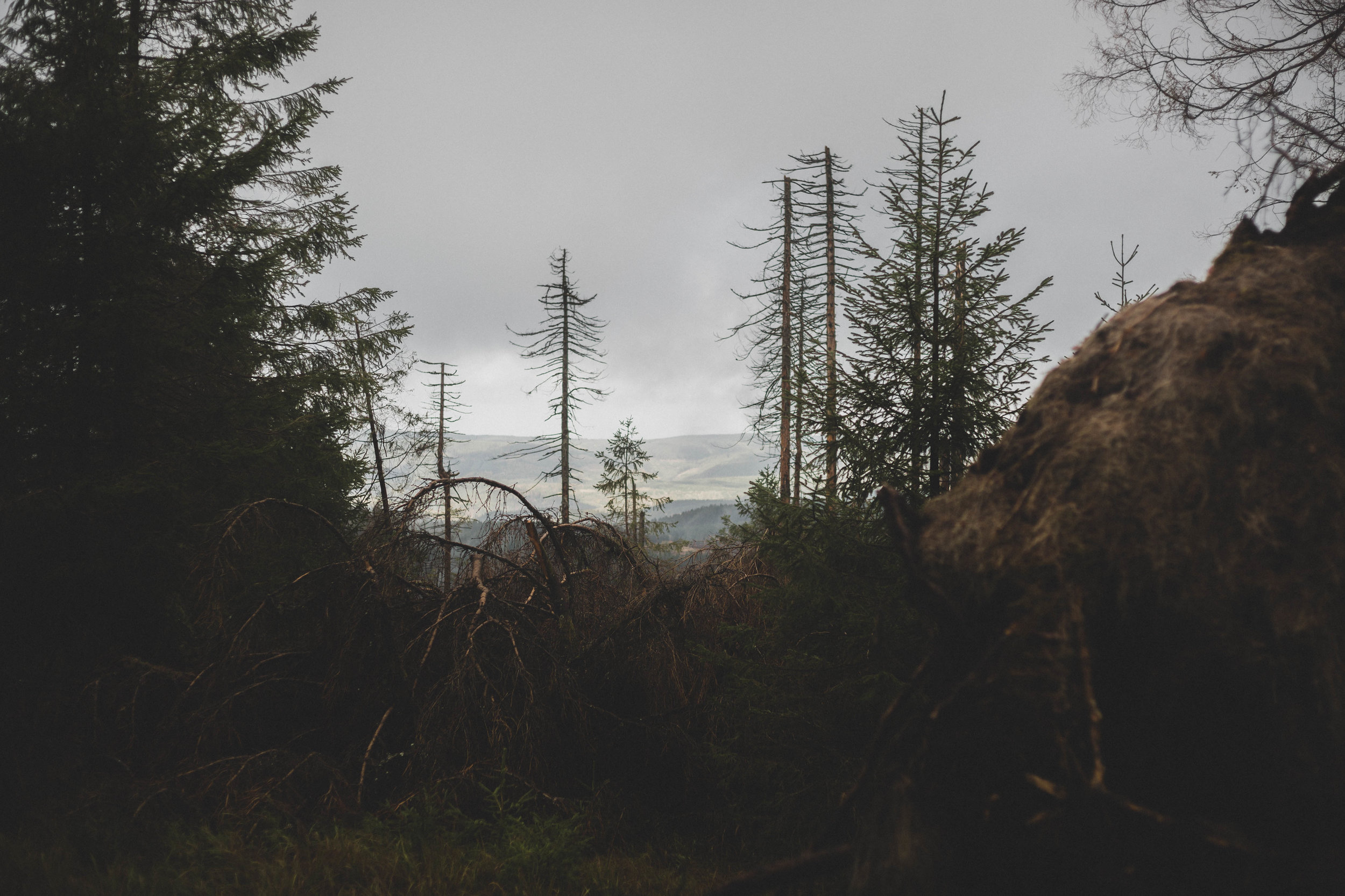 Harz'18-13.jpg
