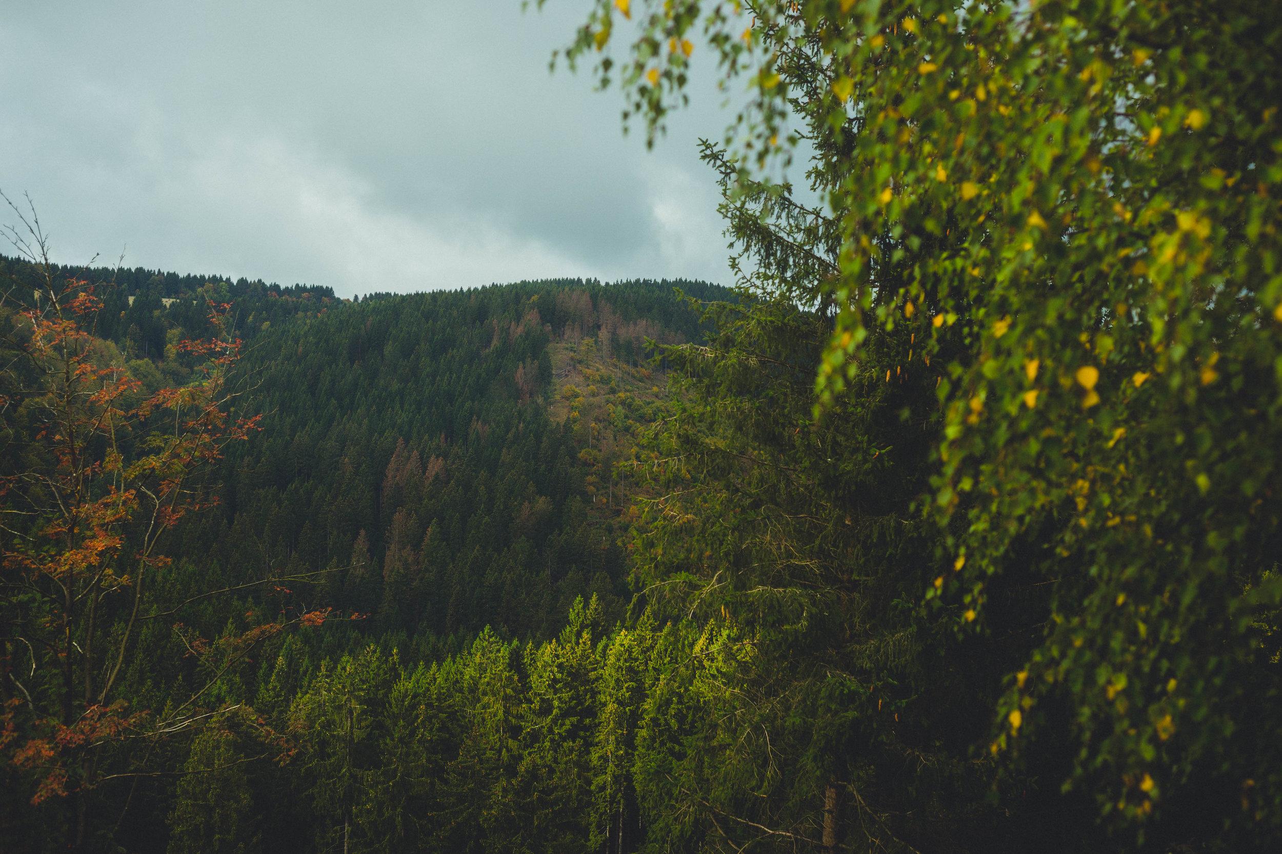 Harz'18-46.jpg