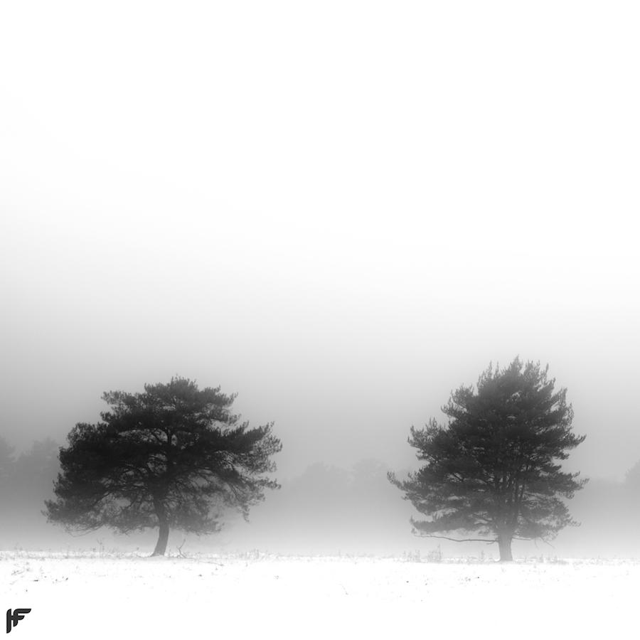 Snowy Trees - Fuji X70