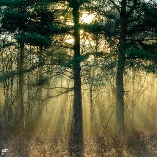 Velmead Common, Hampshire, UK - Fuji XT2, 35mm f2