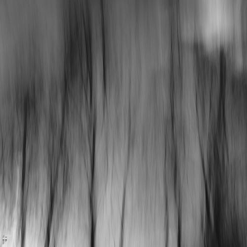 Abstract Trees - Fuji X100F