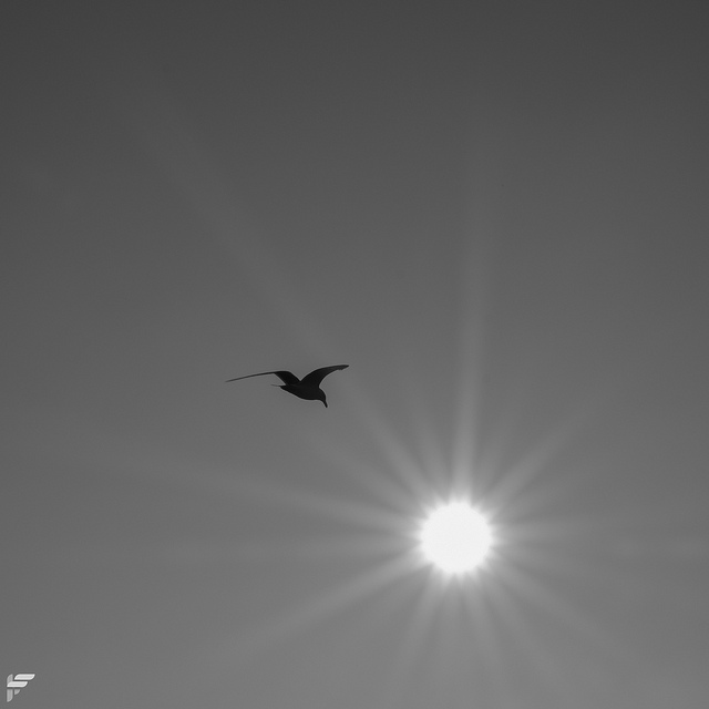 Seagull in the winter sun - Fuji XT2, XF16-55mm F2.8, 55 mm, f22, 1/140s, ISO 200