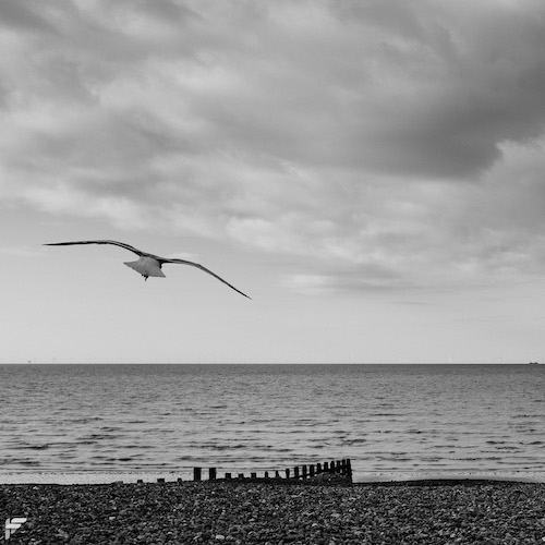 Fuji X100F - Seagull on the prowl for chips