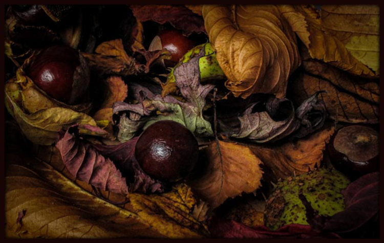 Autumn Leaves and Conkers by Maureen Rush
